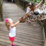 기린에게 먹히는 아이