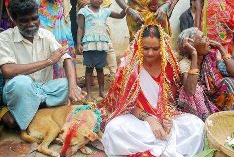 강아지와의 결혼