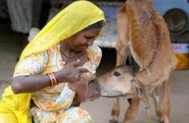 모유먹이는 소