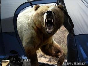 곰에게 먹히기 직전