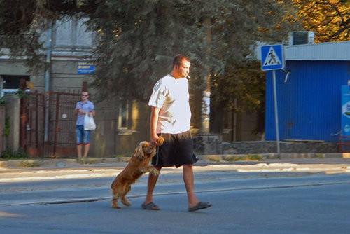 러시아의 강아지 산책
