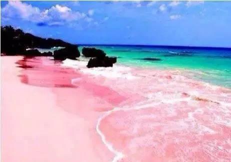 핑크색 모래사장 출처  - BAIDU