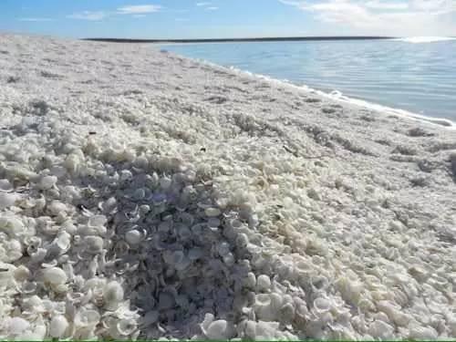 조개껍질 사장 출처 - BAIDU