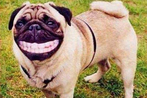 웃고 있는 강아지