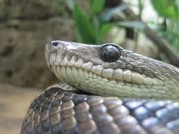 ▲ 생방송을 하던 뱀 전문가가 고의로 독사에 물려 사망하는 사건이 일어났다.
