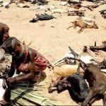 아프리카의 가뭄
