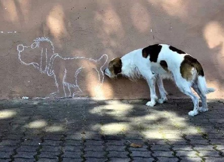 구애 중인 강아지