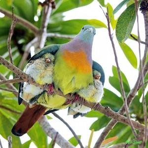 동물 세계의 순수한 사진들
