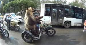▲ 오토바이 타는 곰