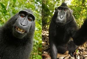 ▲ 원숭이가 스스로 찍은 절묘한 셀카