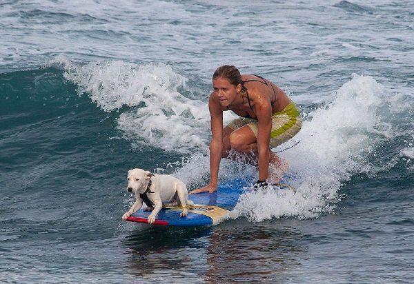 도그 서핑 트레이너