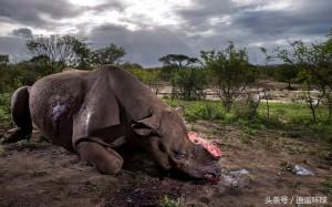 Brent Stirton,남아프리카공화국