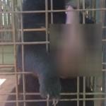 ▲ 수술 받기 전 니얀의 모습