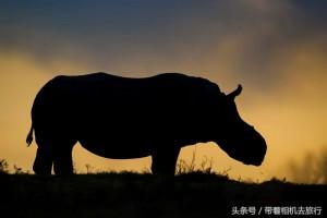 뿔이 없는 코뿔소