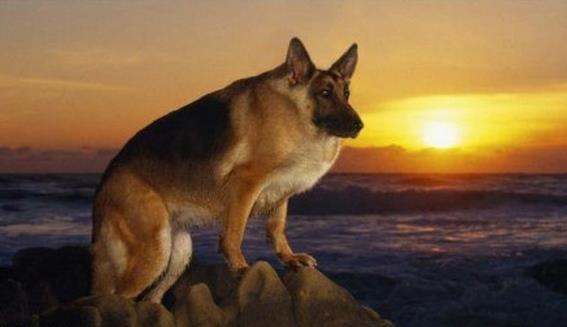 늑대가 만약 목이 없다면? 출처 - 'baidu'