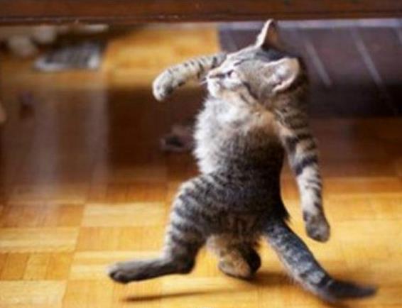 고양이가 만약 목이 없다면? 출처 - 'baidu'