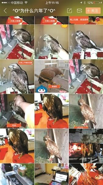 생방송으로 독수리를 판매한 남성 출처 - 'baidu'