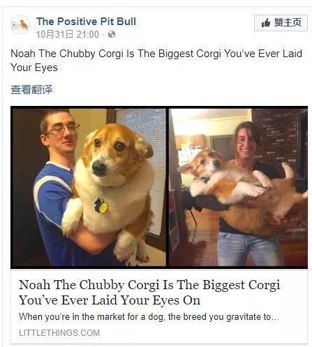 거대한 웰시 코기 기사 출처 - 'baidu'