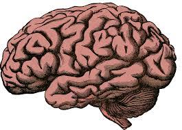 ▲ 심장이 멈춘 후에도 뇌는 몇 분 동안 활동한다는 것이 밝혀졌다