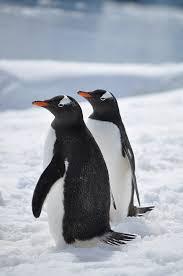 남극 펭귄의 모습