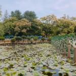 남이섬 안에 있는 연못의 모습. ⓒ문건 기자